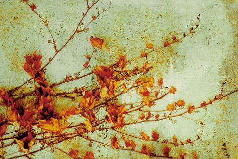 Persimmon-Andrew Michaels-Stretched Canvas Print
