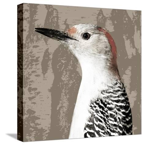 Feathered IV-Anna Polanski-Stretched Canvas Print