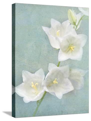 Aqua Floral IV-Amy Melious-Stretched Canvas Print