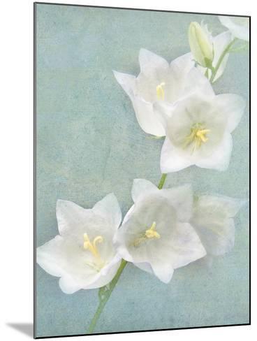 Aqua Floral IV-Amy Melious-Mounted Art Print