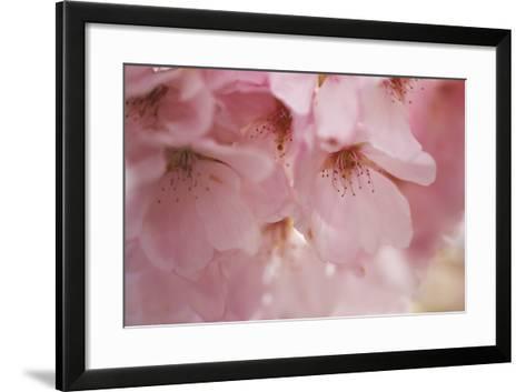 Cherry Blossoms I-Rita Crane-Framed Art Print