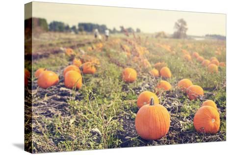 Pumpkin Patch-Roberta Murray-Stretched Canvas Print