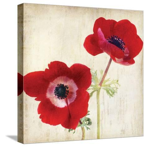 Red II-Amy Melious-Stretched Canvas Print