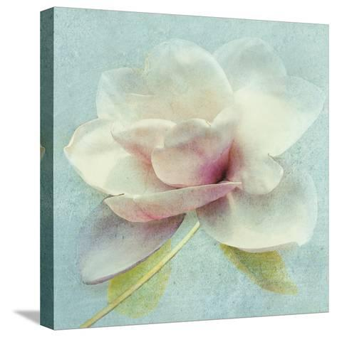Pond Lily Sq-Amy Melious-Stretched Canvas Print