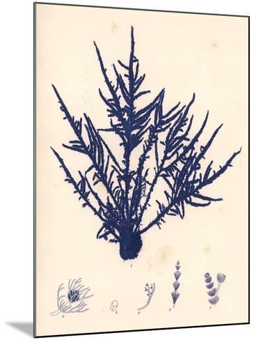 Blue Botanical Study II-Kimberly Poloson-Mounted Premium Giclee Print