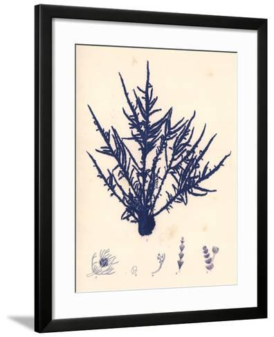 Blue Botanical Study II-Kimberly Poloson-Framed Art Print