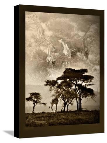 Tanzanian Landscape-Bobbie Goodrich-Stretched Canvas Print