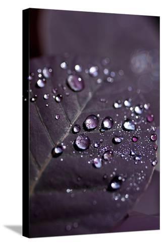 Purple Leaves II-K.B. White-Stretched Canvas Print