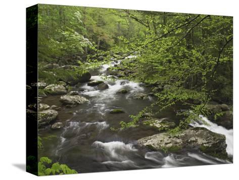 Mountain Stream in Early Spring, Great Smoky Mountains National Park, Tennessee-Adam Jones-Stretched Canvas Print