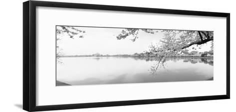 Cherry Blossoms at the Lakeside, Washington DC, USA--Framed Art Print