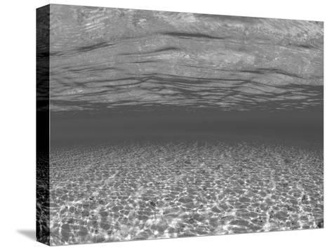 Sandy Seabed Underwater View, Indo-Pacific-Jurgen Freund-Stretched Canvas Print