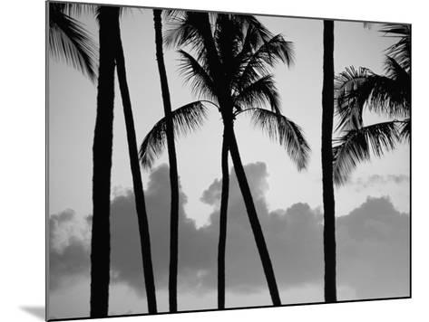 Salt Water Pond State Park, Kauai, Hawaii, USA, Pacific-McCoy Aaron-Mounted Photographic Print