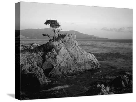 Lone Cypress Tree on Rocky Outcrop at Dusk, Carmel, California, USA-Howell Michael-Stretched Canvas Print