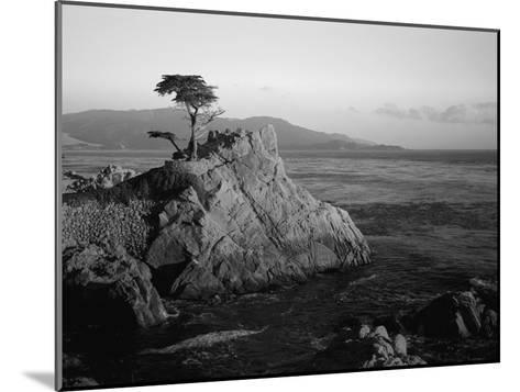 Lone Cypress Tree on Rocky Outcrop at Dusk, Carmel, California, USA-Howell Michael-Mounted Photographic Print
