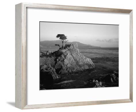 Lone Cypress Tree on Rocky Outcrop at Dusk, Carmel, California, USA-Howell Michael-Framed Art Print