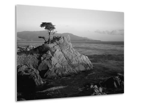 Lone Cypress Tree on Rocky Outcrop at Dusk, Carmel, California, USA-Howell Michael-Metal Print