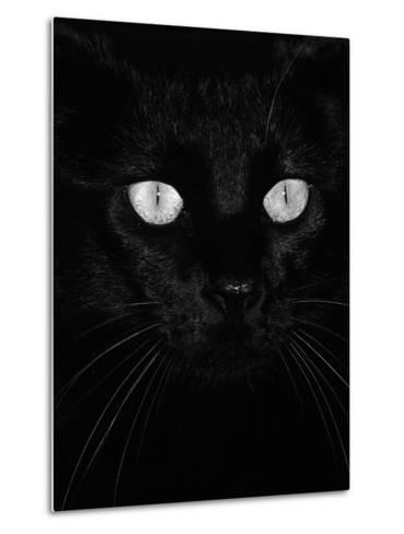 Black Domestic Cat, Eyes with Pupils Closed in Bright Light-Jane Burton-Metal Print