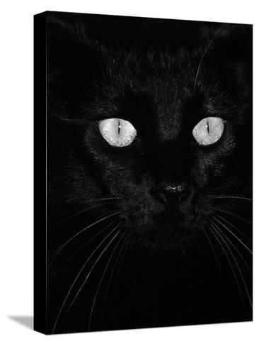 Black Domestic Cat, Eyes with Pupils Closed in Bright Light-Jane Burton-Stretched Canvas Print