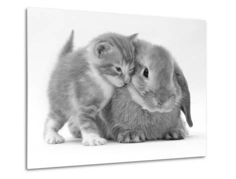 Domestic Kitten (Felis Catus) Next to Bunny, Domestic Rabbit-Jane Burton-Metal Print