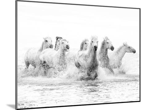 White Horses of Camargue Running Through the Water, Camargue, France-Nadia Isakova-Mounted Photographic Print