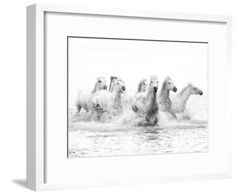 White Horses of Camargue Running Through the Water, Camargue, France-Nadia Isakova-Framed Art Print