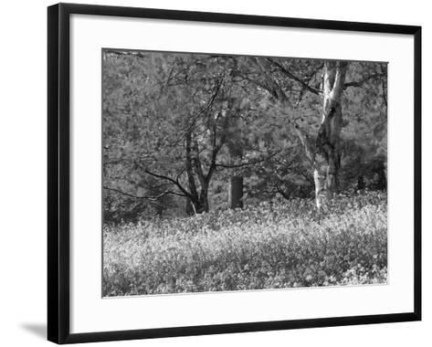 Bluebells in Woods, Springtime-Jon Arnold-Framed Art Print