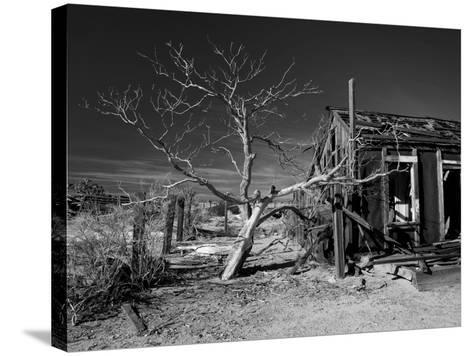 California, Cima, Mojave National Preserve, Abandoned Mojave Desert Ranch, Winter, USA-Walter Bibikow-Stretched Canvas Print