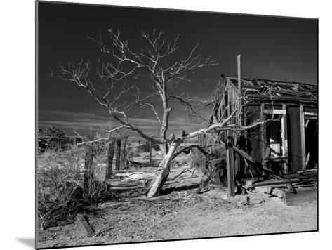 California, Cima, Mojave National Preserve, Abandoned Mojave Desert Ranch, Winter, USA-Walter Bibikow-Mounted Photographic Print