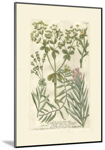 Garden Varietals III-Johann Wilhelm Weinmann-Mounted Art Print