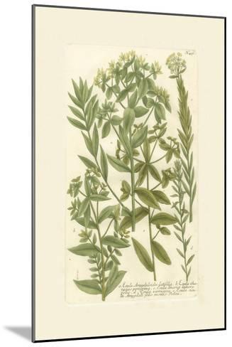 Garden Varietals V-Johann Wilhelm Weinmann-Mounted Art Print
