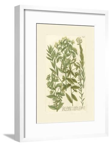 Garden Varietals V-Johann Wilhelm Weinmann-Framed Art Print