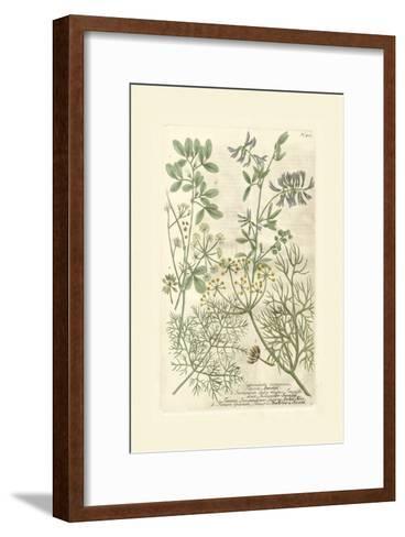 Garden Varietals IV-Johann Wilhelm Weinmann-Framed Art Print