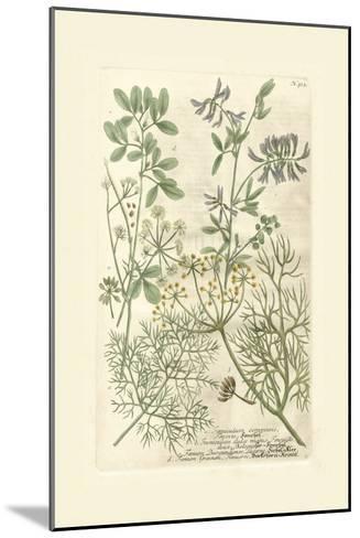 Garden Varietals IV-Johann Wilhelm Weinmann-Mounted Art Print