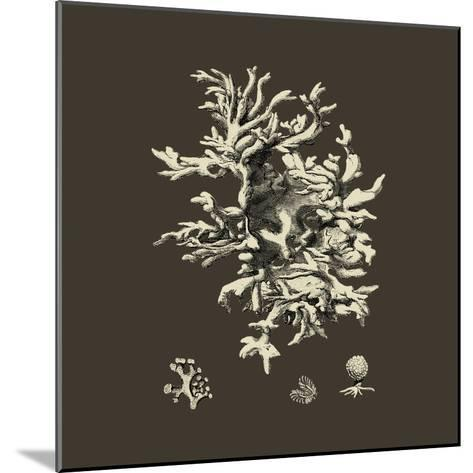 Chocolate & Tan Coral III-Vision Studio-Mounted Art Print