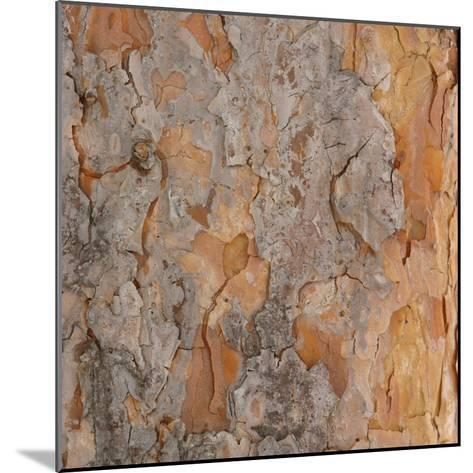 Nature's Textures VII-Vision Studio-Mounted Art Print