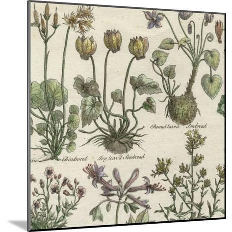 Delicate Garden I-Vision Studio-Mounted Art Print