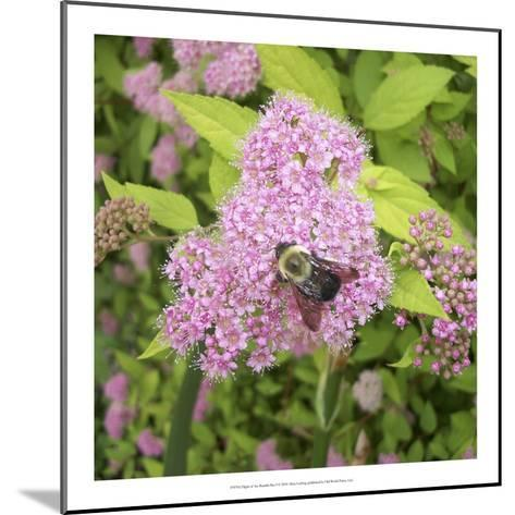 Flight of the Bumble Bee I-Alicia Ludwig-Mounted Art Print