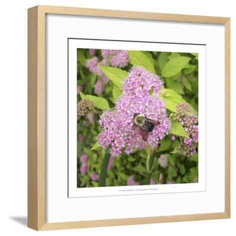 Flight of the Bumble Bee I-Alicia Ludwig-Framed Art Print