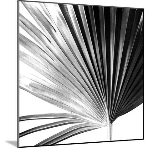 Black and White Palms IV-Jason Johnson-Mounted Art Print
