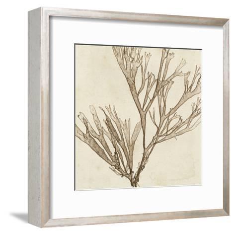 Brilliant Seaweed VII--Framed Art Print
