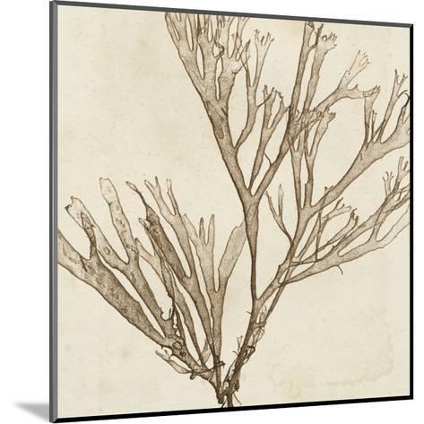 Brilliant Seaweed VII--Mounted Art Print