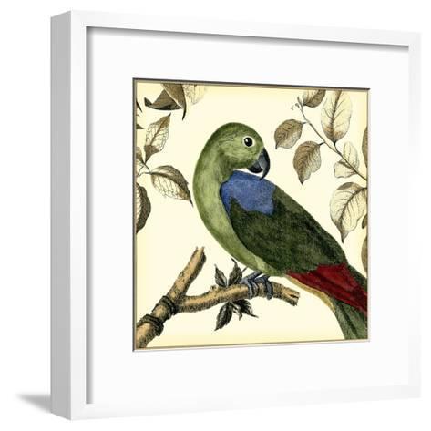 Tropical Parrot III-Martinet-Framed Art Print