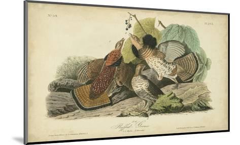 Audubon Ruffed Grouse-John James Audubon-Mounted Art Print