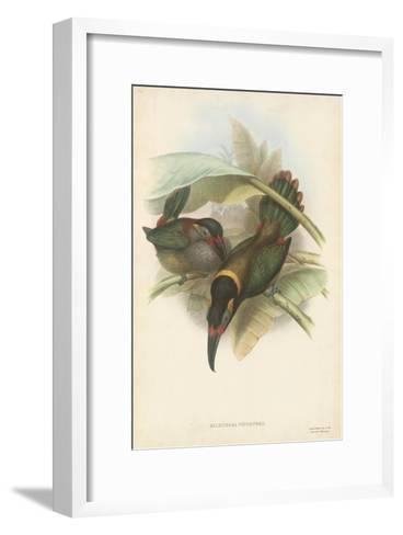 Tropical Toucans VI-John Gould-Framed Art Print