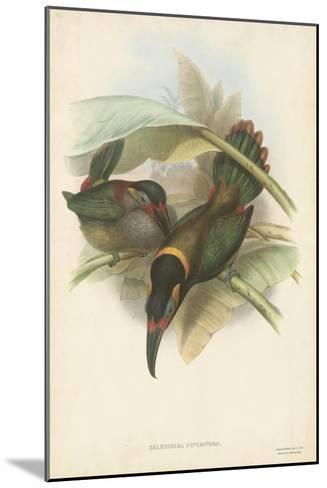 Tropical Toucans VI-John Gould-Mounted Art Print