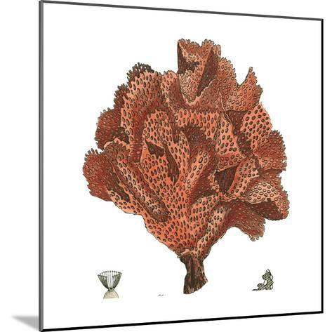 Red Coral IV-Vision Studio-Mounted Art Print
