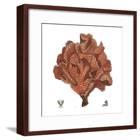 Red Coral IV-Vision Studio-Framed Art Print