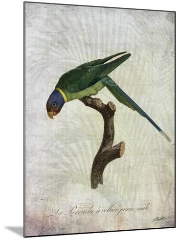 Parrot Jungle IV-John Butler-Mounted Art Print