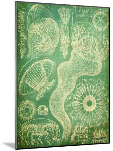 Sealife I-John Butler-Mounted Art Print