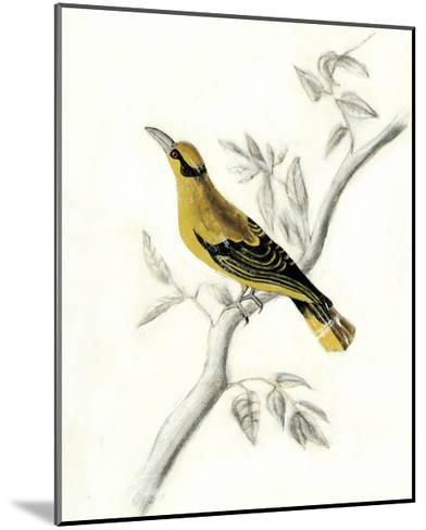 Rustic Aviary II-Naomi McCavitt-Mounted Art Print